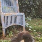 Vieux fauteuil peint, abandonné dans le jardin, il attend une nouvelle vie...patience et huile de coude requises !