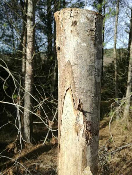 Utiliser bois pour créer patere