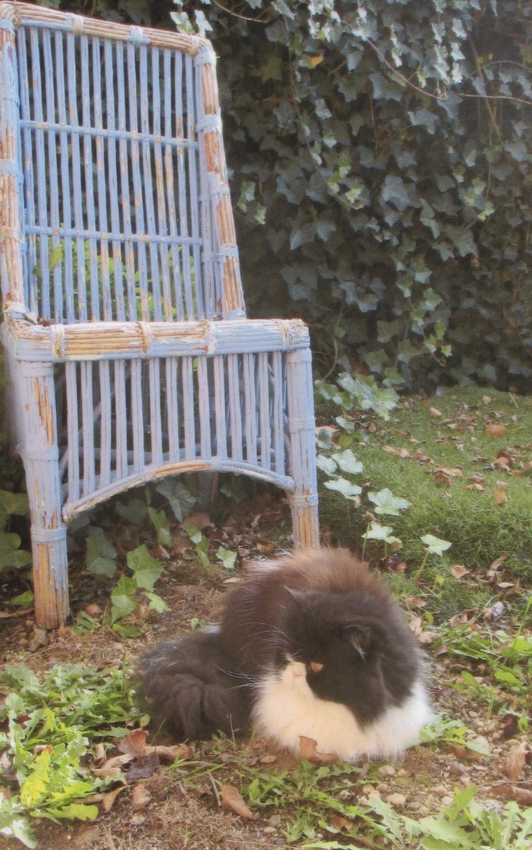 Vieux fauteuil peint, abandonné dans le jardin, il attend une nouvelle vie…patience et huile de coude requises !
